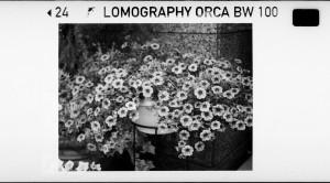 Lomography Orca 110 B&W Film  toylab